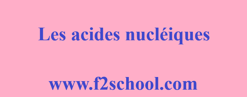 Photo : Acides nucléiques