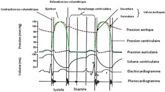 le remplissage ventriculaire - Cardiologie